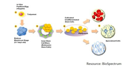 تحقیقات سلول های بنیادی